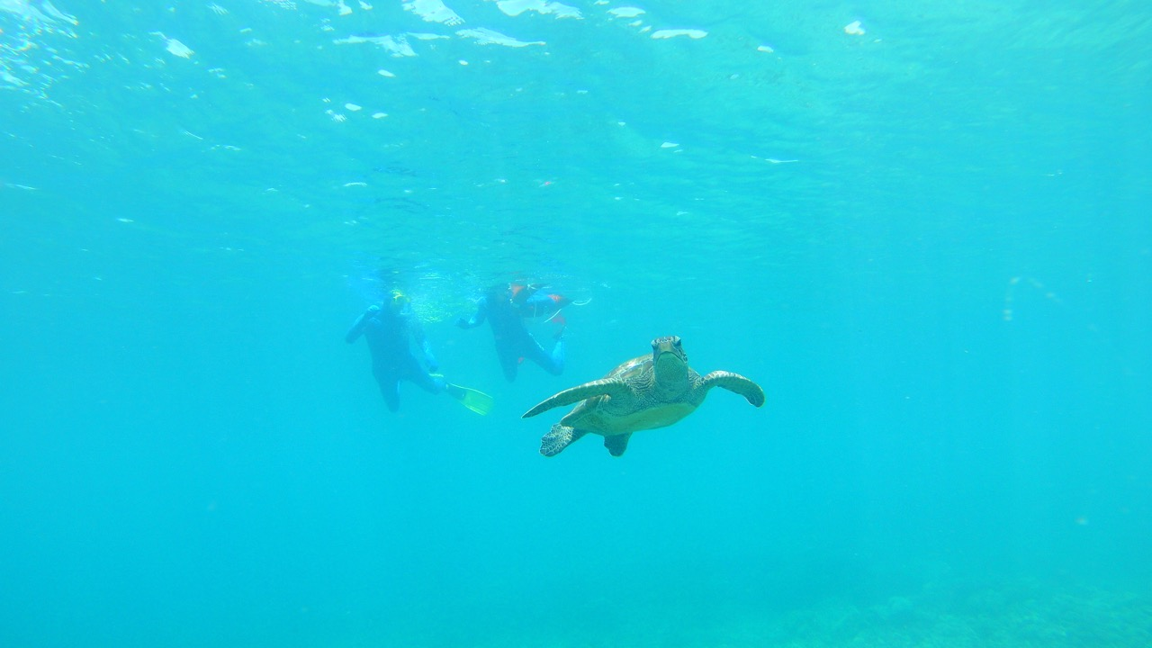 snorkeling with a sea turtle on the great barrier reef
