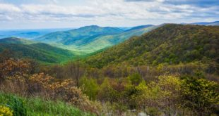 Green landscape in Shenandoah National Park