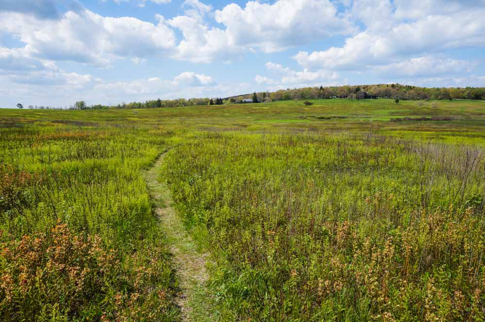 Trail in Big Meadows, Shenandoah National Park