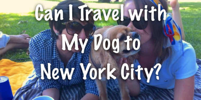Can I Travel with My Dog to New York City?